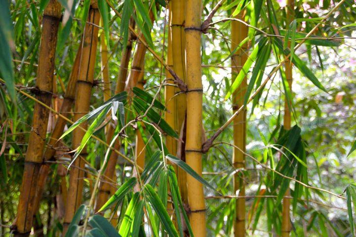 Hoe duurzaam is bamboe nu eigenlijk?