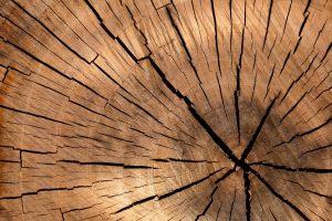 Waarom kiezen voor houtbouw?