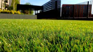 Hoe onderhoud je gras?