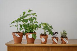 Verhuizen naar een duurzaam huis