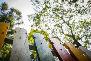 5 tips om je tuin duurzamer te maken