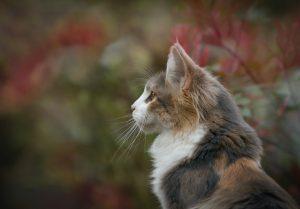 Hoe garandeer je het best de veiligheid van je huisdier?